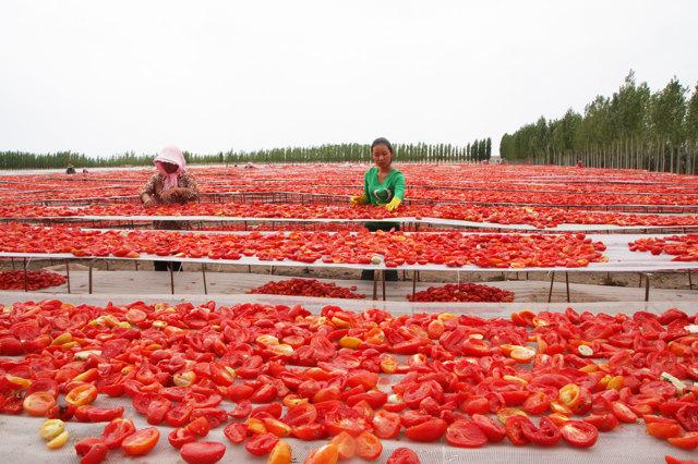 Regione dello Xinjiang, agosto 2015. - Xinhua/Eyevine/Contrasto