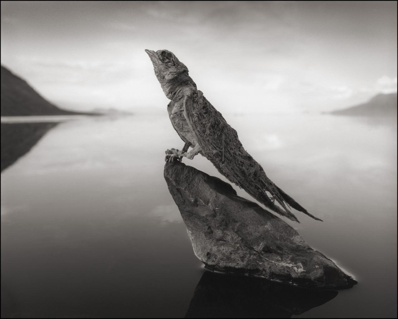 Risultati immagini per lago natron