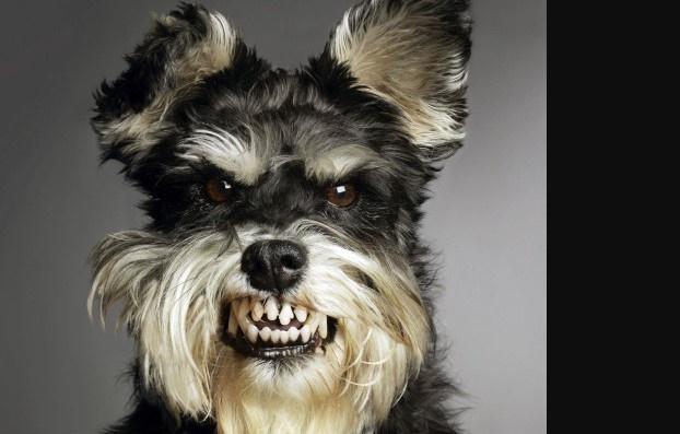 I cani percepiscono le cattive persone