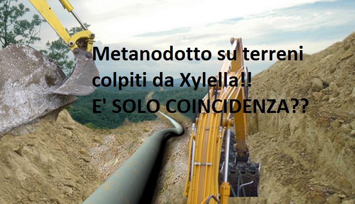 Metanodotto terreni Xylella