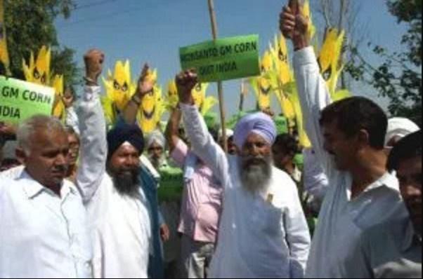 Monsanto perde milioni di dollari in India.Gli agricoltori boicottano gli ogm e utilizzano i loro semi
