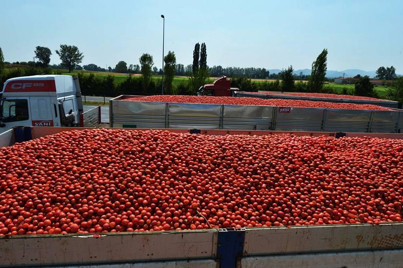 agricoltori siciliani affamati dai pomodori marocchini