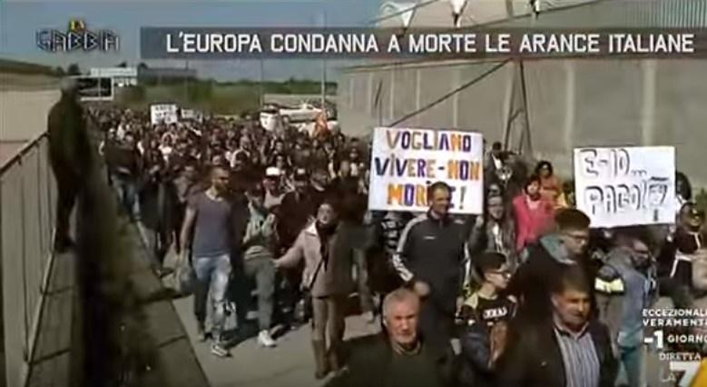 agricoltori siciliani europa condanna a morte le arance siciliane