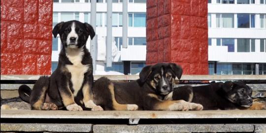 cani chernobyl