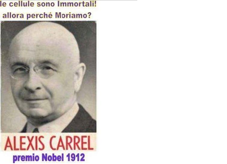 cellule-immortali