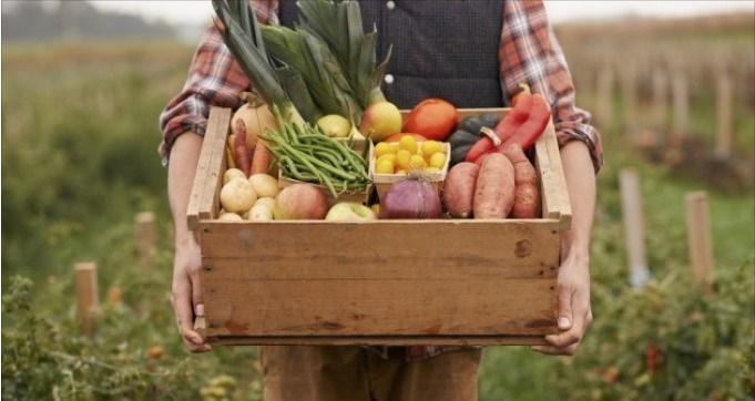 danimarca agricoltura biologica