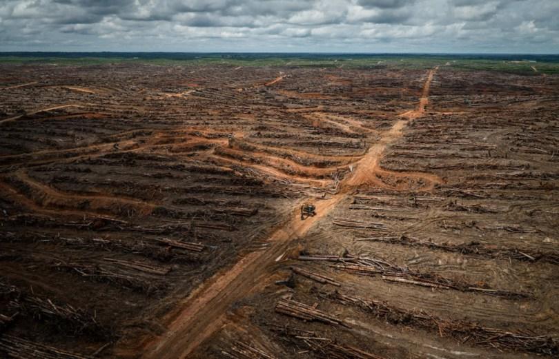 Deforestazione:la grande foresta pluviale spazzata via da Nestlè e Unilever