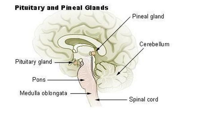 ghiandola pineale