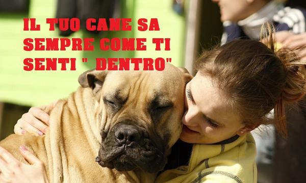 i cani avvertono il dolore delle persone