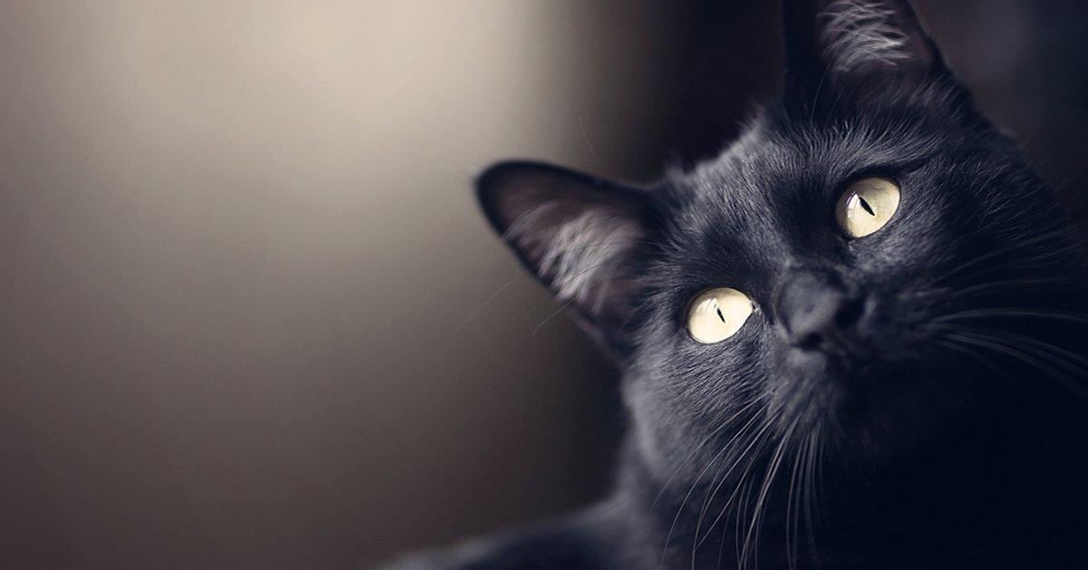 i gatti proteggono ada fantasmi e dalle energie negative