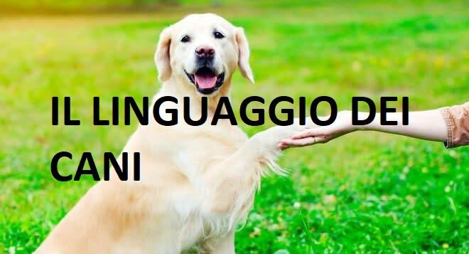 il linguaggio dei cani