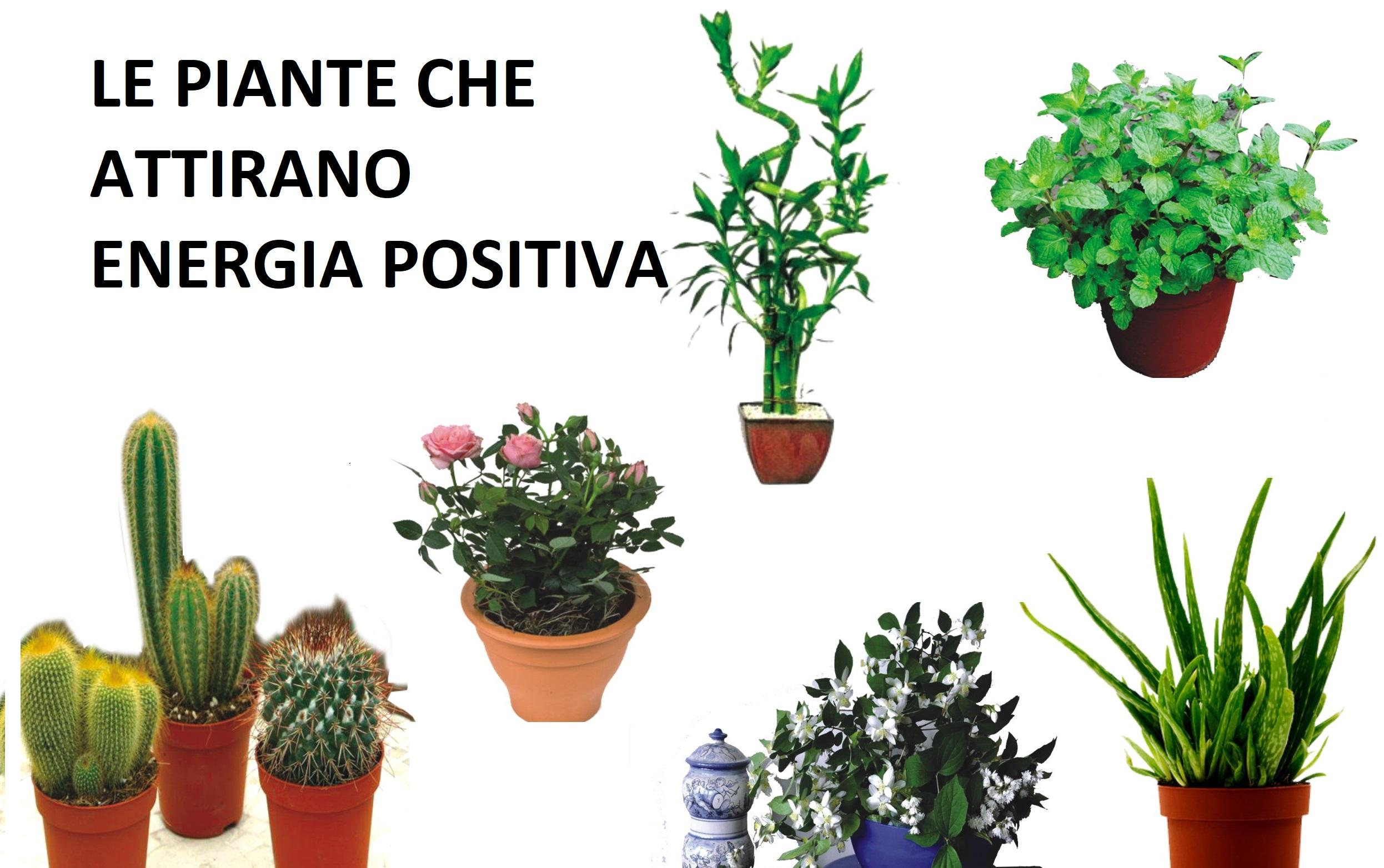 le piante che attraggono energia positiva in casa