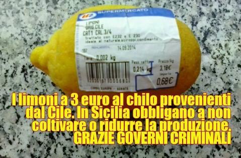 limoni cile sicilia