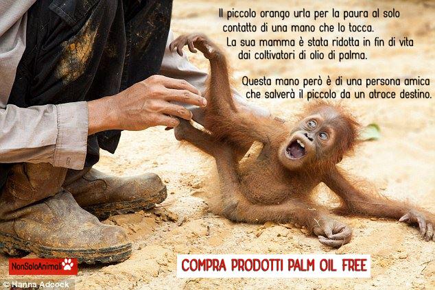 palm-oil-free-cucciolo