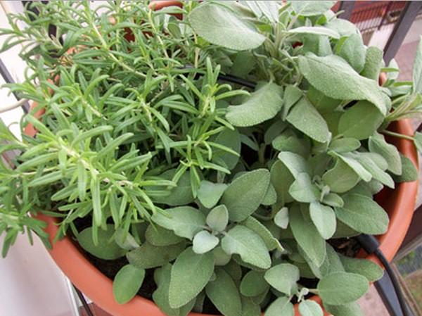 piante alzheimer