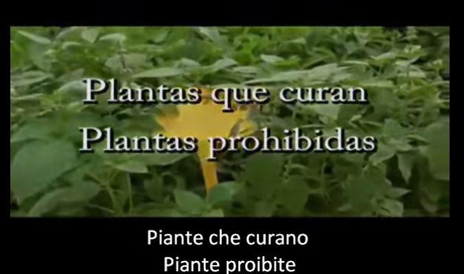 piante proibite