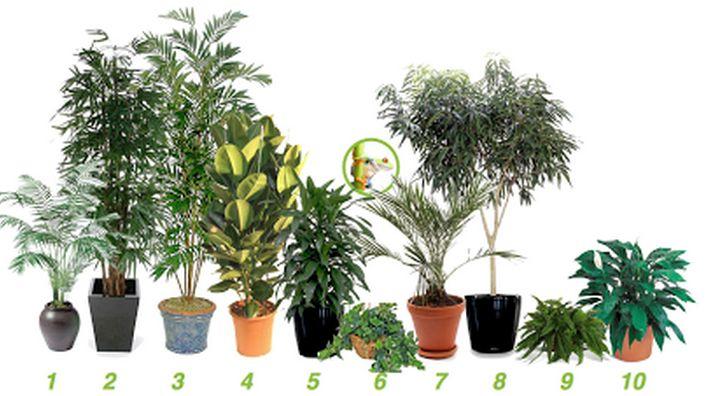 piante inquinamento domestico