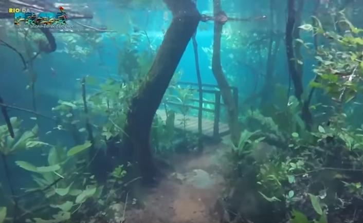 recanto rio da prata foresta immersa nell'acqua