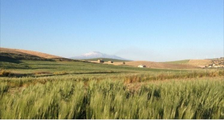 rivoluzione contadini multinazionali grani antichi