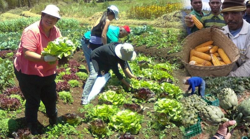 Perché i Rockefeller con Monsanto cercano di distruggere gli agricoltori?