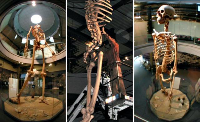 scheletri giganti 2