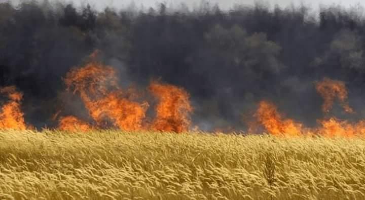 L'Ungheria distrugge tutte le sementi Monsanto OGM e brucia i campi di grano