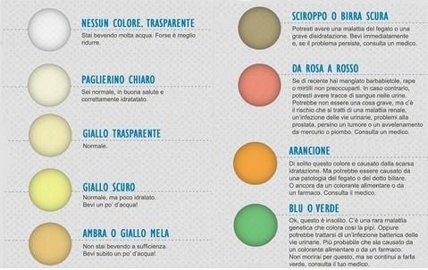 Dal colore della nostra urina si possono capire molte cose sulla nostra salute.La nostra pipì è la spia dell'organismo
